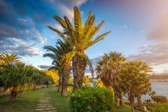 IL-Mellieha, Malta - Mooie palmen en bloemen bij zonsondergang met verbazende hemel en wolken en Mellieha-stad bij achtergrond Royalty-vrije Stock Foto