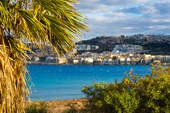 Il-Mellieha, Malta - Palm tree and plants at Mellieha bay with turquoise sea water and Mellieha town at background. On a warm summer day Stock Image