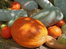 Il melone di inverno verde chiaro e le zucche arancio vive di colore hanno sparso su erba secca Fotografia Stock