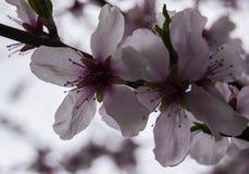 Il messaggero della primavera è arrivato immagine stock libera da diritti