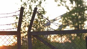 Il metallo del filo spinato recinta il tramonto dorato uguagliante di ora - segno della gabbia del pericolo e di nessuna libertà archivi video