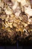 Il metodo classico di essiccamento del tabacco nel forno immagine stock