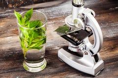 Il microscopio dei bambini in tavola di natura morta va, pianta, fogliame, biologia Fotografia Stock