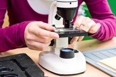 Il microscopio ottico bianco Immagini Stock Libere da Diritti