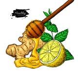 Il miele, lo zenzero, il limone e la menta vector il disegno Cucchiaio di legno, goccia del miele, hearb royalty illustrazione gratis