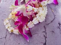 Il Milkweed indiano gigante del piccolo fiore reale fresco bianco della corona, Swallowwort e la ghirlanda locale tailandese porp immagine stock