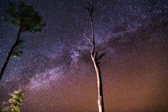 Il milkyway con l'albero Fotografia Stock Libera da Diritti