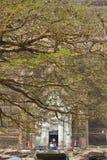 Il Mingun Pahtodawgy dietro un albero Immagini Stock Libere da Diritti