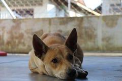 IL MIO ANIMALE DOMESTICO Fotografia Stock