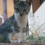 Il mio animale domestico timido Fotografia Stock Libera da Diritti