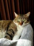 Il mio bello gatto fotografia stock libera da diritti