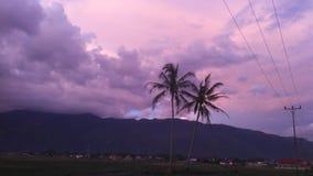 Il mio bello giacimento del riso fotografia stock libera da diritti