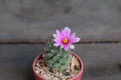 Il mio cactus Fotografie Stock Libere da Diritti