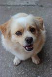Il mio cane fotografia stock libera da diritti