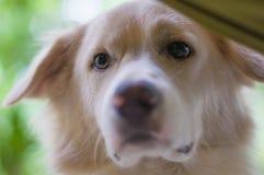 Il mio cane Immagini Stock