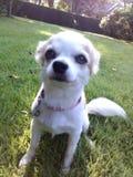 Il mio cane Fotografie Stock