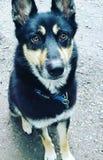 Il mio cane Immagini Stock Libere da Diritti