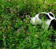 Il mio cane che odora i fiori fotografie stock