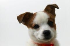 Il mio cane, Hacky Fotografia Stock