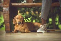 Il mio cane, il mio migliore amico Immagini Stock
