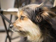 Il mio cane Tobby Immagini Stock