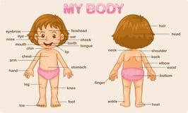 Il mio corpo Fotografia Stock