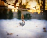 Il mio cuore è fatto di ghiaccio fotografia stock