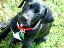 Il mio fringillide del cane Fotografia Stock