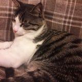 Il mio gatto fotografie stock libere da diritti