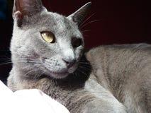 Il mio gatto fotografia stock libera da diritti