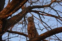 Il mio gatto! Fotografie Stock Libere da Diritti