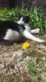 Il mio gatto Fotografia Stock