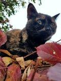 Il mio gatto bello Fotografie Stock
