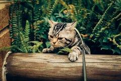 Il mio gatto, Levi fotografie stock