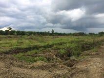 Il mio giardino in Tailandia prima Immagine Stock