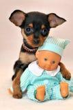 Il mio piccolo amico - cane di piccola taglia di Russkiy con il giocattolo del bambino Fotografia Stock Libera da Diritti