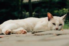 Il mio piccolo gattino Fotografie Stock Libere da Diritti