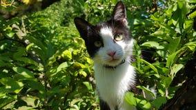 Il mio piccolo gatto Fotografia Stock Libera da Diritti