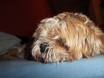 Il mio sonno del cane Immagini Stock Libere da Diritti
