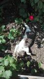 Il mio sonno del gatto Fotografia Stock Libera da Diritti