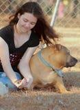 Il mio vecchio cane è ammalato Fotografia Stock