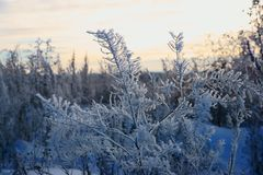 Il miracolo dell'fiore-inverno del ghiaccio, in Russia è venuto geli, più bianco bianco, regione di Nizhny Novgorod, fiori favolo fotografia stock libera da diritti