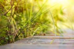 Il mirtillo si ramifica appoggiandosi nell'ambito dei raggi del sole Immagine Stock