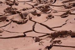 Crepe nel fango Immagini Stock