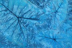 Il modello della foglia ha timbrato su pavimentazione in calcestruzzo pastello blu per decora i passaggi pedonali nel giardino fotografia stock
