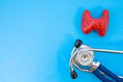 Il modello di studio anatomico della ghiandola tiroide e lo stetoscopio su fondo blu occupano la metà della foto, nel secondo spa fotografie stock libere da diritti
