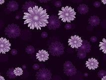 Il modello floreale senza cuciture con la margherita rosa fiorisce su fondo viola scuro Immagini Stock Libere da Diritti