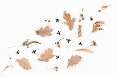 Il modello pallido di autunno, quercia va, ghiande Fotografia Stock