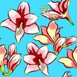 Il modello senza cuciture è illus di vettore del fiore dell'amarillide di hippeastrum Fotografie Stock
