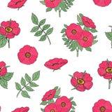 Il modello senza cuciture botanico con la rosa canina rosa fiorisce, stacca e lascia disegnato a mano nello stile antico su fondo Fotografia Stock
